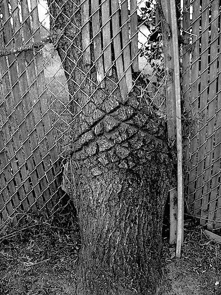 fencetree